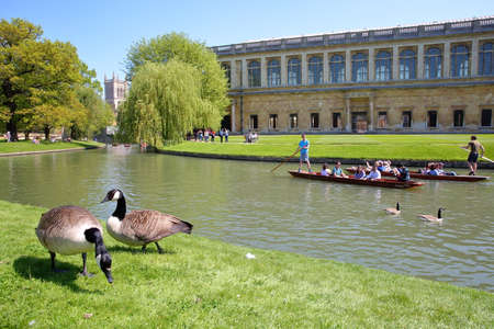 CAMBRIDGE, UK - MAY 6, 2018: Tourists and students punting on the river Cam with geese in the foreground, Trinity College and St Johns College Chapel in the background 報道画像