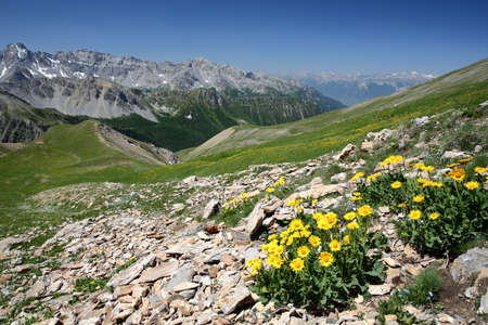 General view of the mountain range overlooking Cristillan valley (above Ceillac village), with yellow flowers in the foreground, Queyras Regional Natural Park, Southern Alps, France Stock fotó