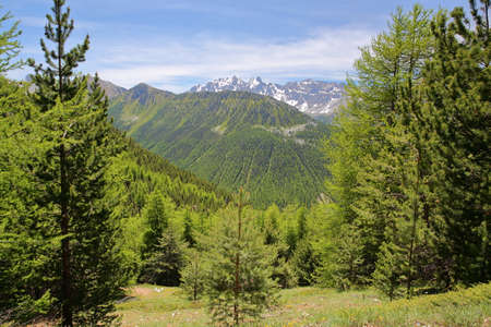 Green scenery (with pine trees) viewed from a hiking path  leading to Fromage Pass above Ceillac village, Queyras Regional Natural Park, Southern Alps, France, with mountain range covered with snow in the background