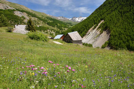 The hamlet Le Villard located along Cristillan Valley above Ceillac village, Queyras Regional Natural Park, Southern Alps, France, with colorful flowers in the foreground
