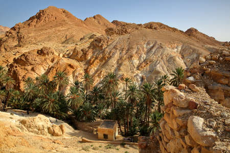 The oasis of Chebika near Nefta, Tunisia, with palm trees, canyon and mineral rocks