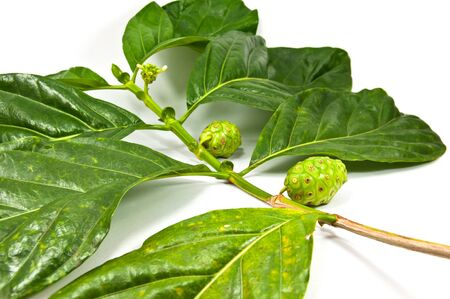morinda: citrifolia and leaf Stock Photo