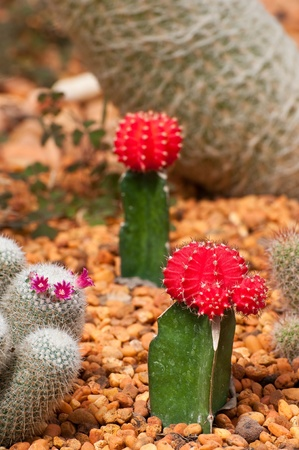 many kinds of cactuses on gravel Stock Photo - 12650651