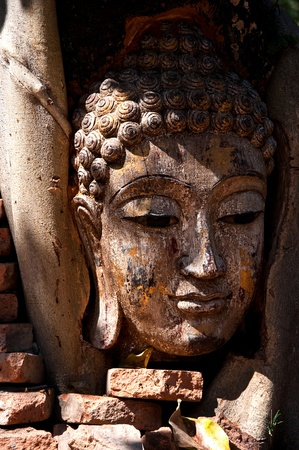 buddha face: Head of wood Buddha in The Tree Roots, Thailand Stock Photo