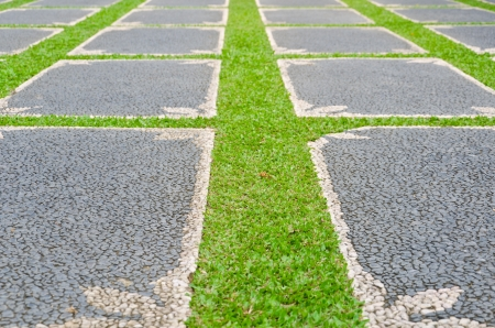 path with grass growing up between the stones Stock Photo - 14507915
