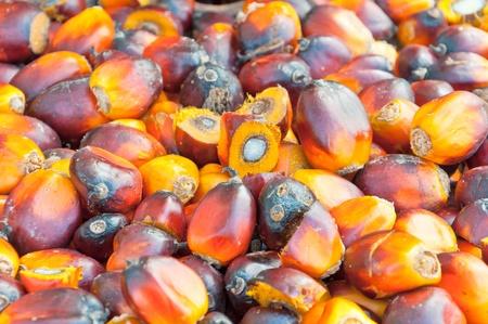 red palm oil: mucchio di frutti di palma da olio