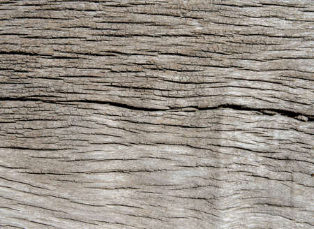 wood texture with nature form photo