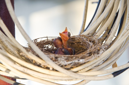 Two baby birds on their nest  photo