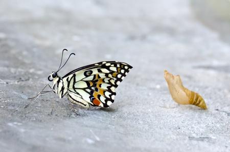 transmute: Mariposa monarca, Mania algodoncillo, beb� reci�n nacido en el piso