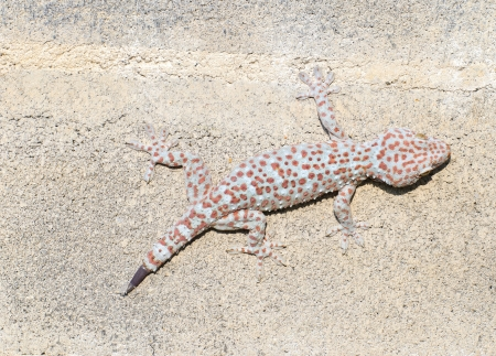 cling: Gecko cling to the wall