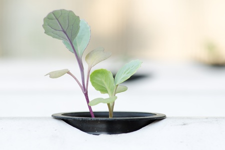 aeration: soilless vegetable or hydroponic system seedling Stock Photo