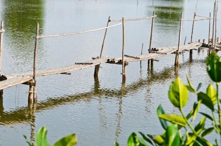 foot bridge: ancient bamboo foot bridge in countryside
