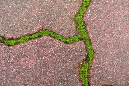 Green grass between cement brick background  photo