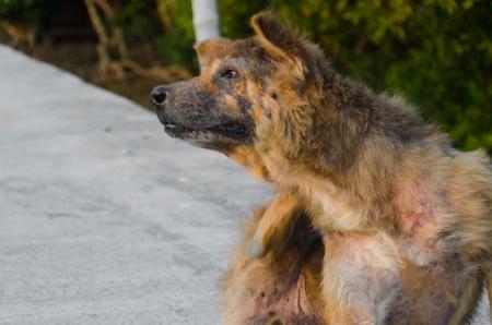 lepra: Abandonado perro callejero sentado en la carretera