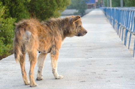 Abandoned stray dog standing on the road  Banco de Imagens