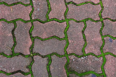 Green grass between cement brick background. photo