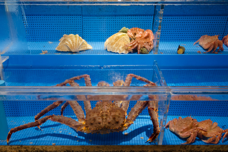 Taraba king crab in fish tank for sale, Hokkaido Japan