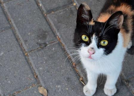 pussycat: Cat