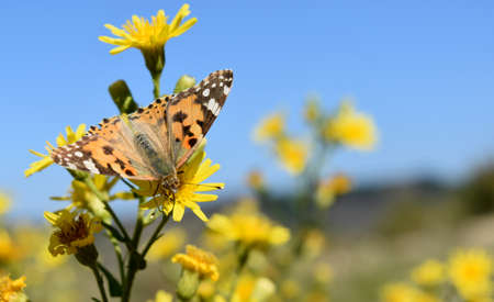 radius: Butterfly