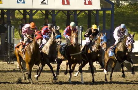 Start of horse races at Hastings Downs Stok Fotoğraf