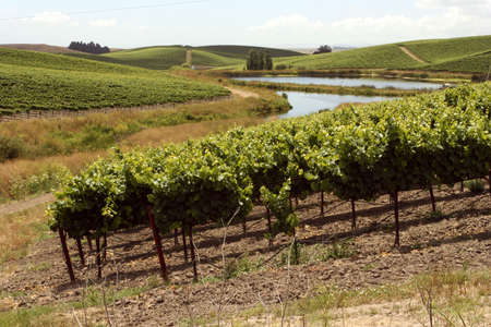nappa: Idyllic vineyards with a windy river in Nappa Valley California Stock Photo
