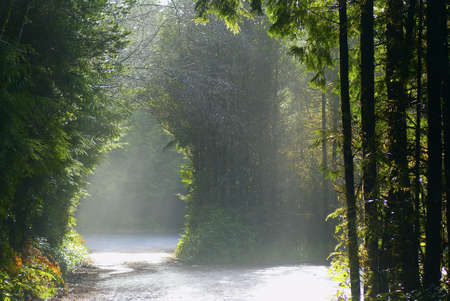 dispersed: Entrance to the Pacific Rim rainforest with dispersed sunshine