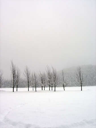 Snow covered trees in a midst of a blizzard, vertical photo