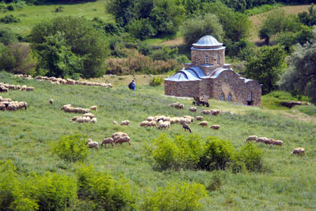 Flock of sheep on wooded slope near monastery on a summer day photo