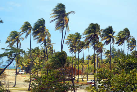 Palm trees in the wind on a tropical beach horizontal wide Stock Photo - 3674644