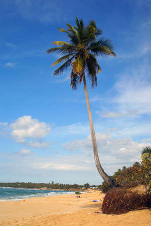 Tropical paradise beach with single palm tree vertical Stock Photo - 3674638