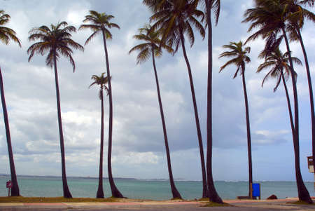 Palm trees on a tropical beach in Puerto Rico Horizontal Stock Photo - 3735188