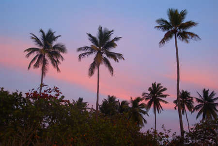 carribean: Three palms at sunset on a tropical Beach Horizontal