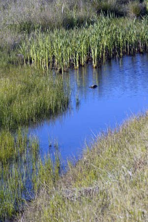 Swamp and Reeds in the pacific northwest in summer