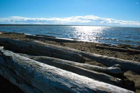 流木が正午ごろバンクーバーの南太平洋岸北西部オーシャン ビーチ
