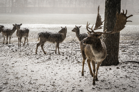 some deerss in the snowy winter