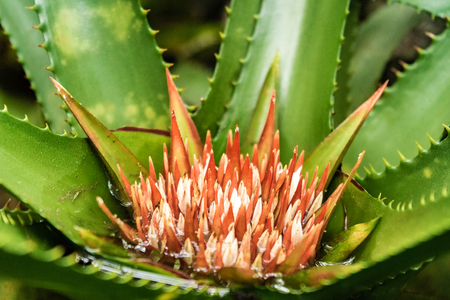 thorny flower Editöryel