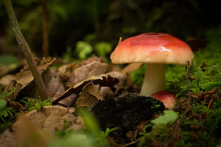colorful mushroom on the ground photo