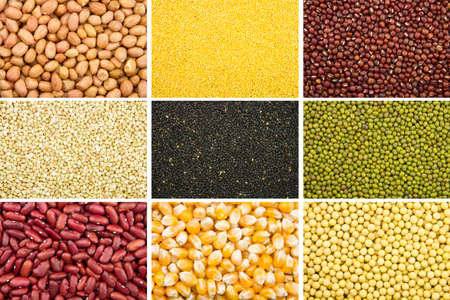 collection of 9 different kinds of grain as background photo