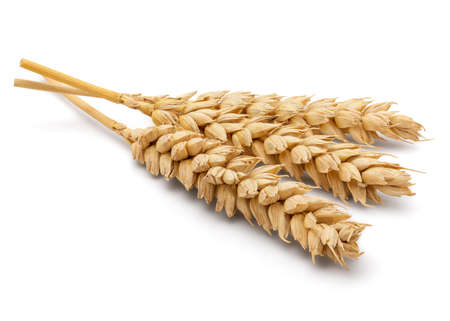 cleaned: Perfect Cleaned Dried Wheat Ear Isolated on White Background in Full Depth of Field. Stock Photo