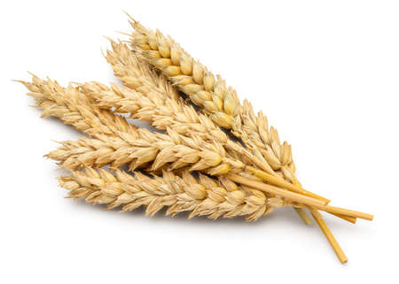 clip art wheat: Perfect Cleaned Dried Wheat Ear Isolated on White Background in Full Depth of Field. Stock Photo