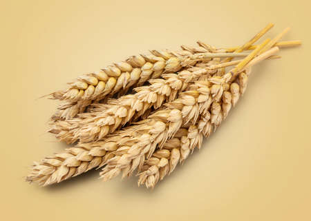 depth of field: Perfect Cleaned Dried Wheat Ear Isolated on Yellow Background in Full Depth of Field. Stock Photo