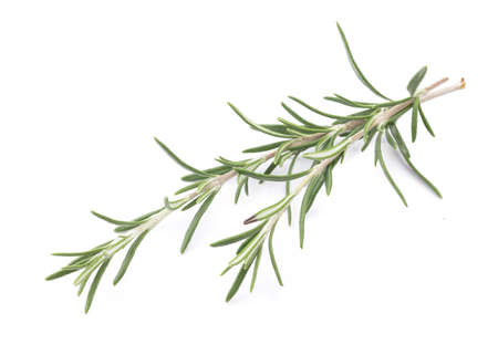 Perfect Rosemary Isolated on White Background.