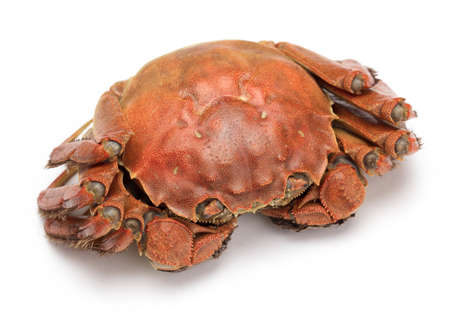 Perfect Crab isolated on white background.