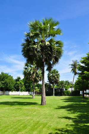 A garden with Asian palm trees photo