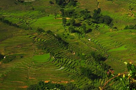 yuanyang: Rice terraces of Yuanyang, China