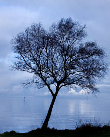 sihlouette of a tree by a lake at dusk shot against a deep blue cloudy sky