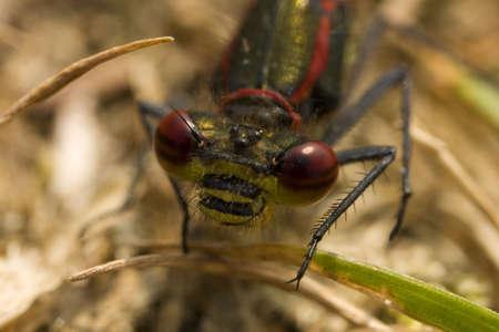 macro shot of a dragon flys eyes Stock Photo