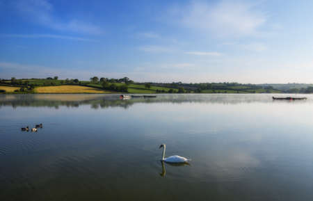 peacefull lake in the morning time with a swan and ducks