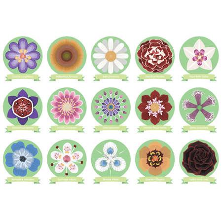 Set of flower icons Illustration