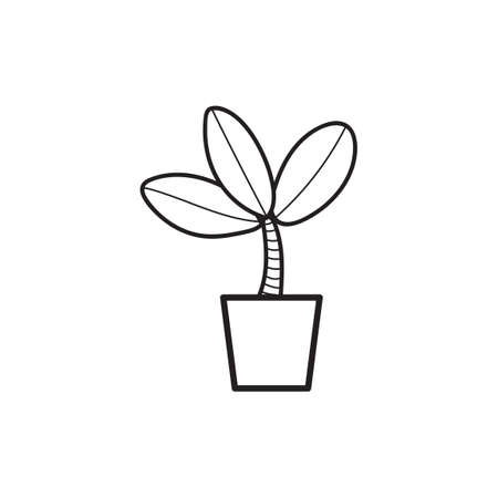 chlorophyll: Rubber plant